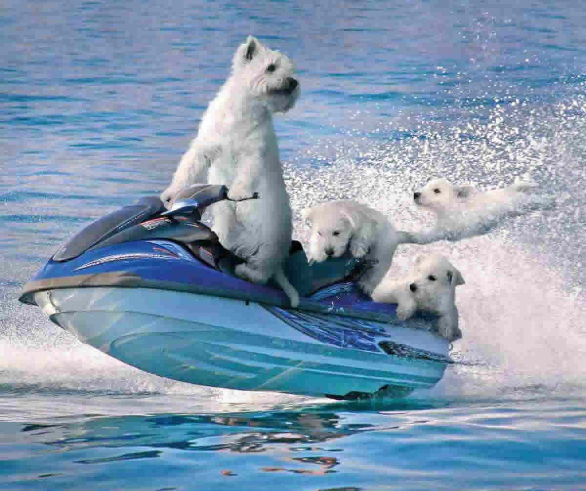Dogs-On-Boat-Funny-Water-Picture